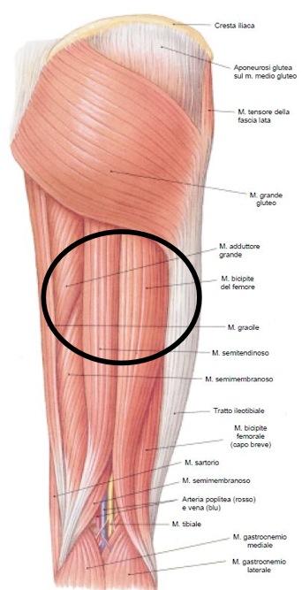 squilibrio muscolare