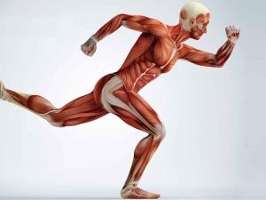 muscles-runner