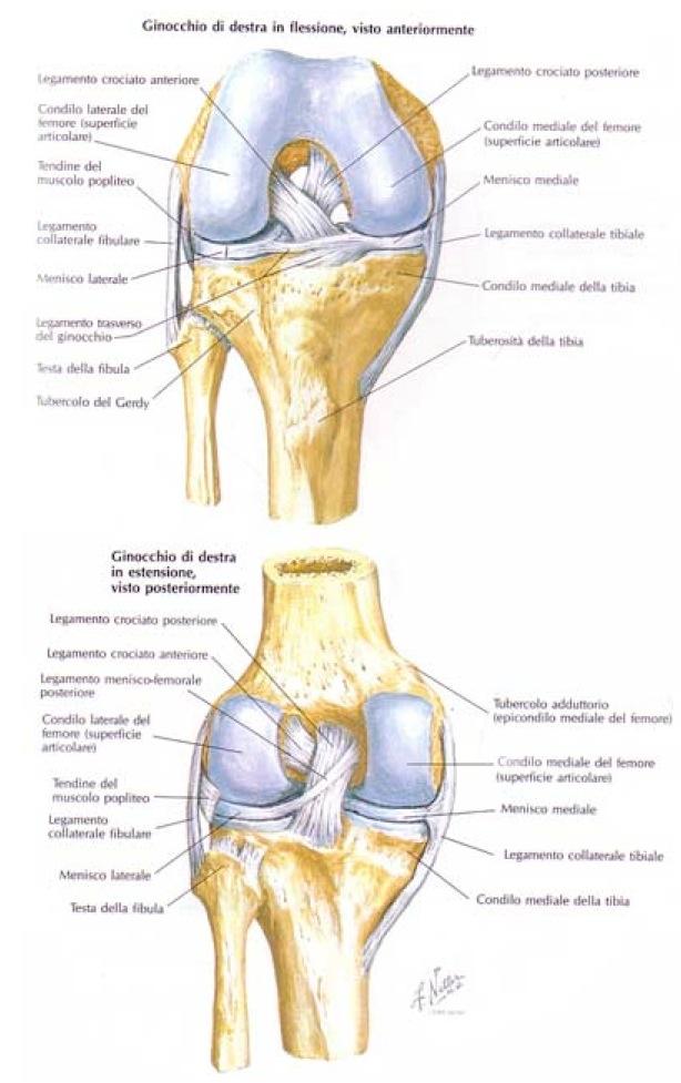 lesioni del menisco