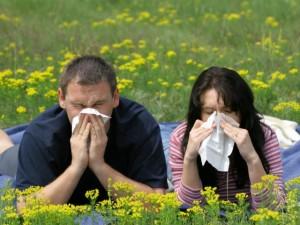 primavera allergia